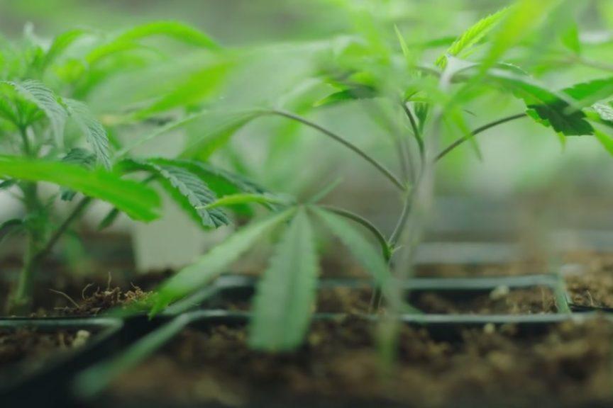 Medical Marijuana Certification in New Hampshire